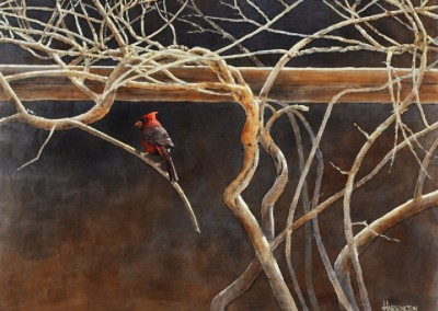 Cardinal and Wisteria (2015)<br>acrylic on panel, 22x28 inches