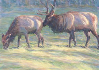 Boxley Valley Elk (2017)<br>acrylic on canvas, 48 x 48 x 1.5 inches